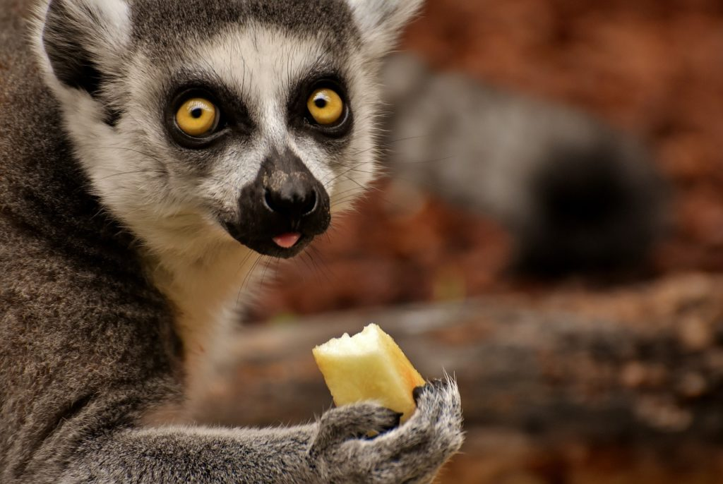 osusume - アトピーのかゆみを抑える食べ物は何?食事だけで完治できるって本当!?