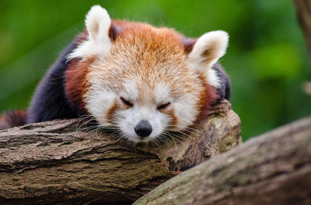 osusume, %e3%81%8b%e3%82%86%e3%81%bf%ef%bc%88%e7%97%92%e3%81%bf%ef%bc%89%e5%af%be%e7%ad%96 - 夜、アトピーのかゆみで掻かない方法!かゆみに効く「睡眠管理」の3つのコツ